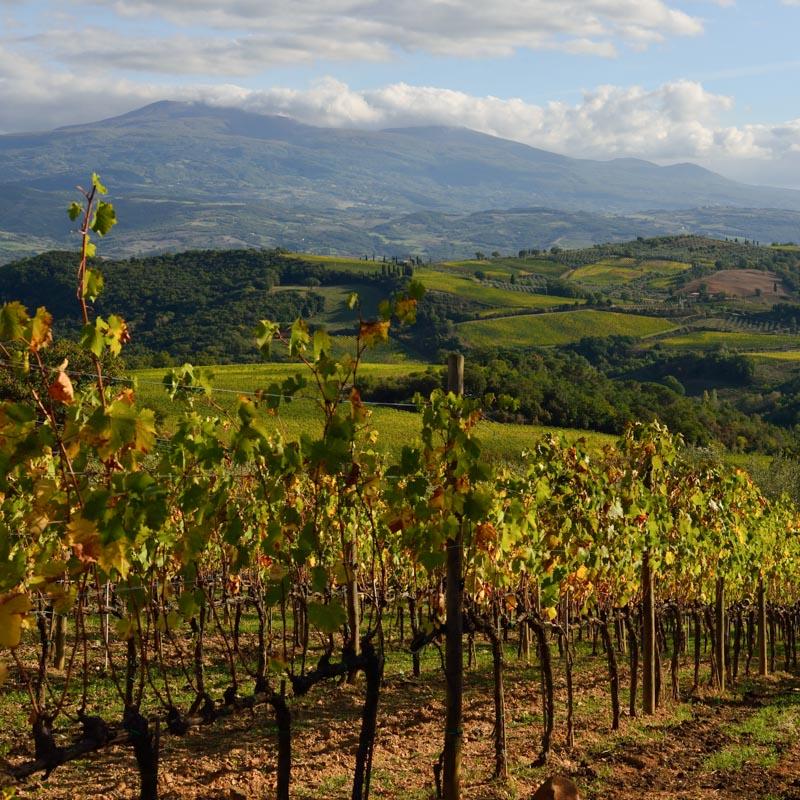 Brunello Wine Tour From Montepulciano